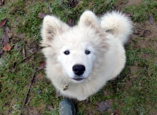Doggy-Kart Val Louron