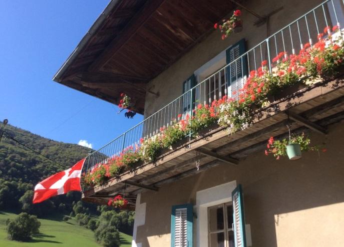 L'Aster de Savoie - Boissin Dan Jean-Paul