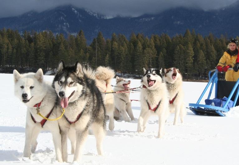 Perros de trineo estación de esquí Grand Montets