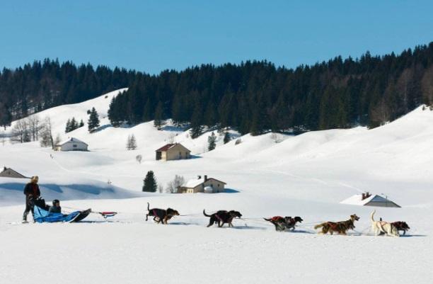 Perros de trineo estación esquí Les Rousses