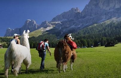 Trekking con llamas Carezza