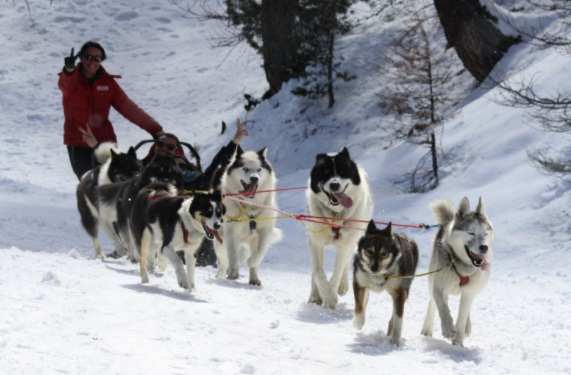 Trineo de perros estación de esquí Risoul